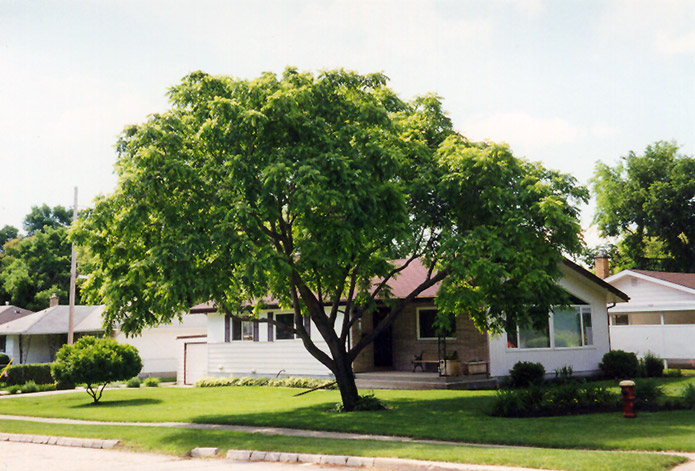 Can Trees Reduce Noise Pollution